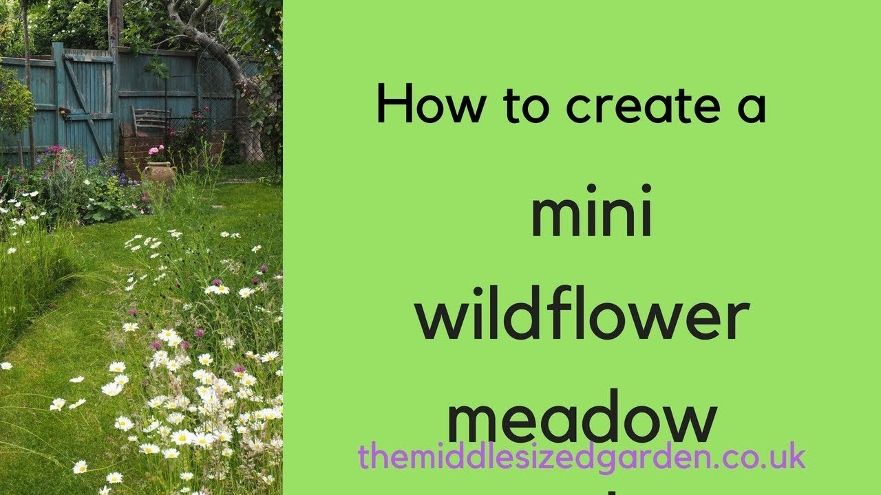 How To Create A Mini Wildflower Meadow In Your Garden Youtube