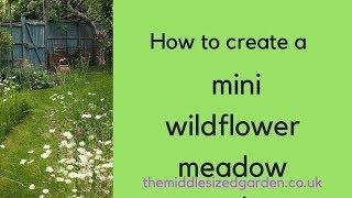 So erstellen Sie eine mini-Wildblumen-wiese in Ihrem Garten