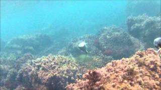 pescasub ,pescata di fine anno in hd.