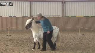 Zirkuslektion:  Der Spanische Gruß und der Spanische Schritt (www-pferde-magazin.info)