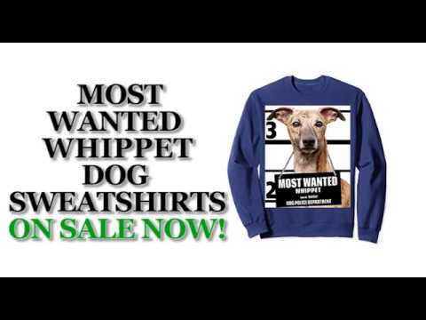 Most Wanted Whippet Cute Funny Dog Sweatshirts - Men's, Women's, Kid's - Navy, Grey, Dark Heather