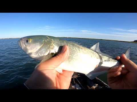 FISH ON! Founder, Spanish Mackerel And Blue Fish | Summer Fishing Wilmington NC Pt. 1