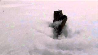Katze taucht in den Schnee