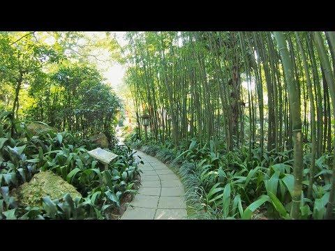 Orchid Garden(lan pu), Guangzhou /蘭圃, 廣州 [4K 60FPS]