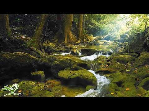 Relaxing Music With Birds Singing - Beautiful Piano Music & Guitar Music By Soothing Relaxation