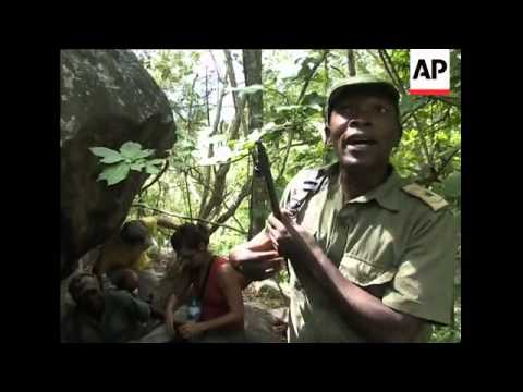Illegal logging in Mozambique Miombo