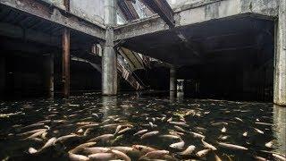 Этот заброшенный торговый центр кишит тысячами рыб!