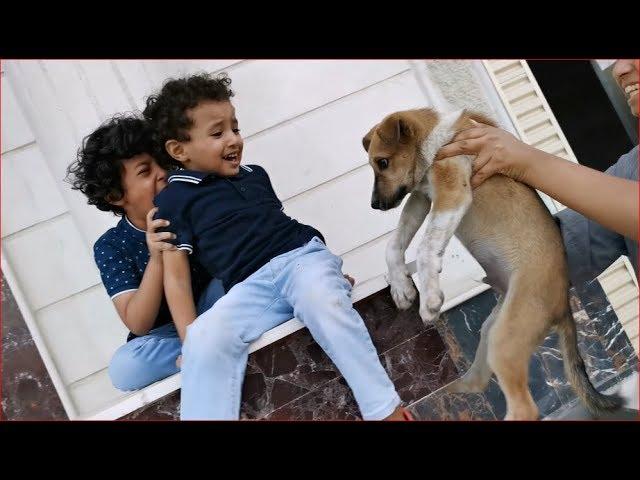 🔥إشترينا كلب صغنون شوفوا ردة فعل آسر وسامر لما شافوه!🔥