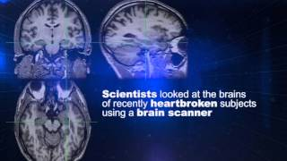 A Matter of Fact: Falling in Love | SciTech Now