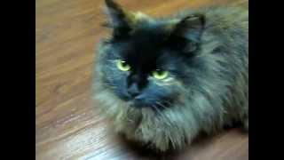 видеоролик про кошек