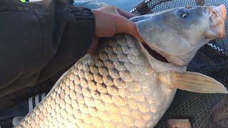 КРУПНЫЕ САЗАНЫ берут Брызги и треск рыбалка летом на обычные снасти