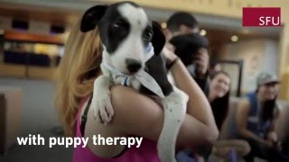 Puppy Therapy at SFU's Surrey Campus