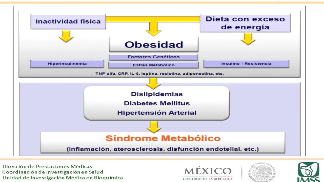 Dieta para pacientes con hipertrigliceridemias