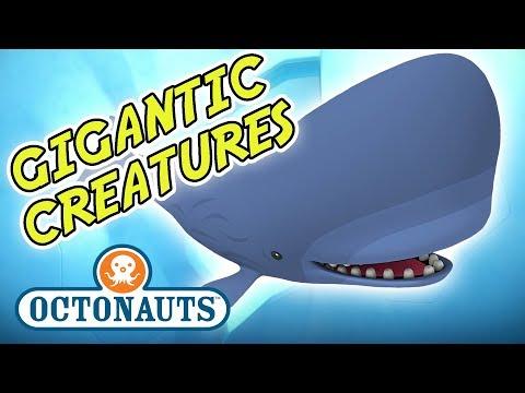 Octonauts - It's Halloween Month! | Gigantic Creatures