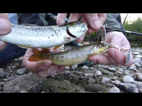 Spinners Doing the Business |  River Fishing