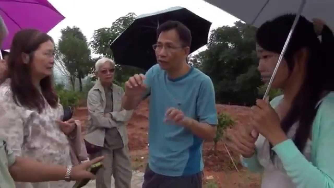 紅豆杉與其他植物的的種植 - YouTube
