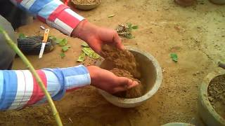 75 how to grow cuctas plant cutting care tips january 2017