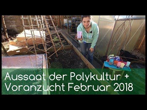 Aussaat Des Polikulturexperiments + Voranzucht Februar 2018