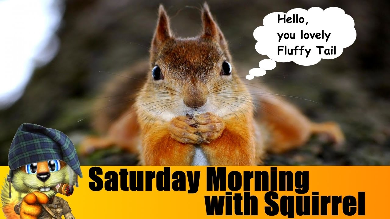 Image result for saturday squirrel images