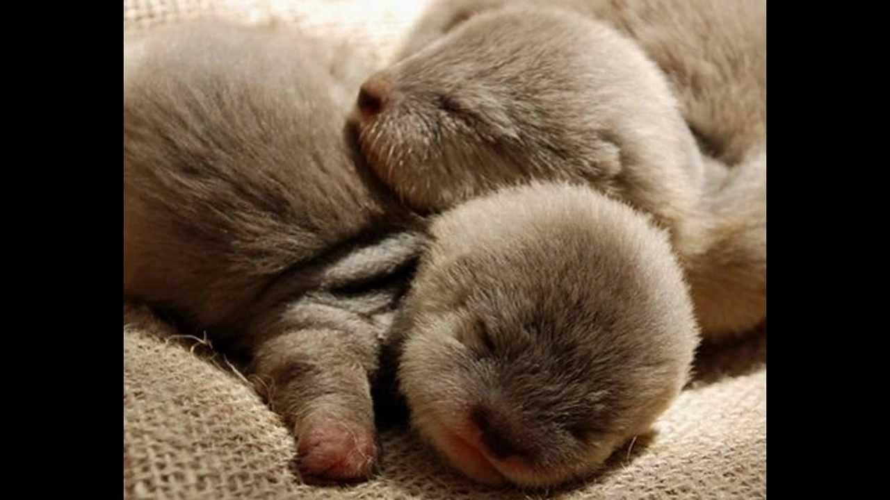 Compile d 39 images de b b animaux trop mignon youtube - Animal mignon ...