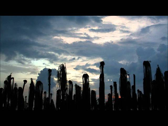 shels-in-dead-palm-fields-minute2midnight