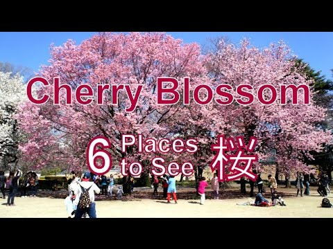 6 places to see cherry blossoms in tokyo japan tokyo for Tokyo what to see
