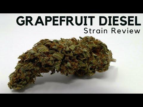Grapefruit Diesel Cannabis Strain Information - ISMOKE