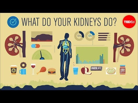How do your kidneys work? - Emma Bryce thumbnail