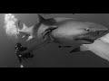 Capture de la vidéo Sharkwater Trailer - Rob Stewart - Hd