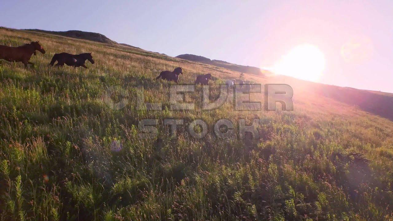 Aerial Herd Of Wild Horses Running On Hill Toward Sunset Mountain View