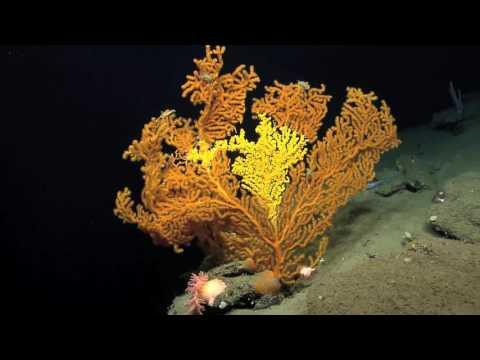 Mystic Aquarium Campaign for Marine National Monument Designation in Region