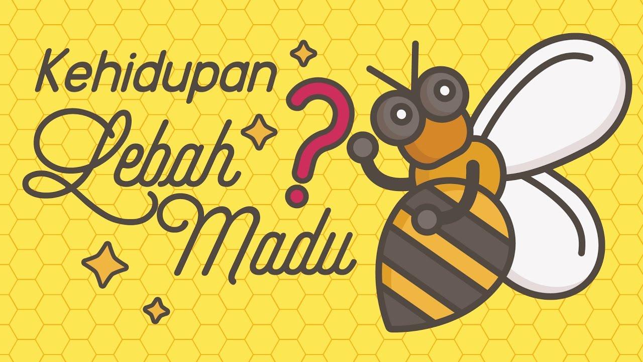 Animasi Lebah Lucu Populer Dan Terlengkap Top Meme