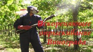 видео Защита винограда от ос начинается с ранней весны
