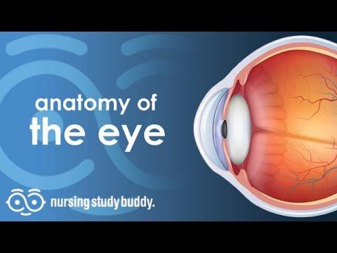 Anatomy Of The Eye Nursing Study Buddy Video Library Youtube