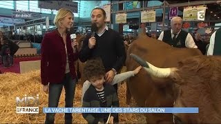 ANIMAUX : La vache Tarentaise, une des stars du salon