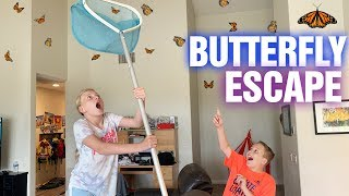 Butterfly Habitat Escape!!