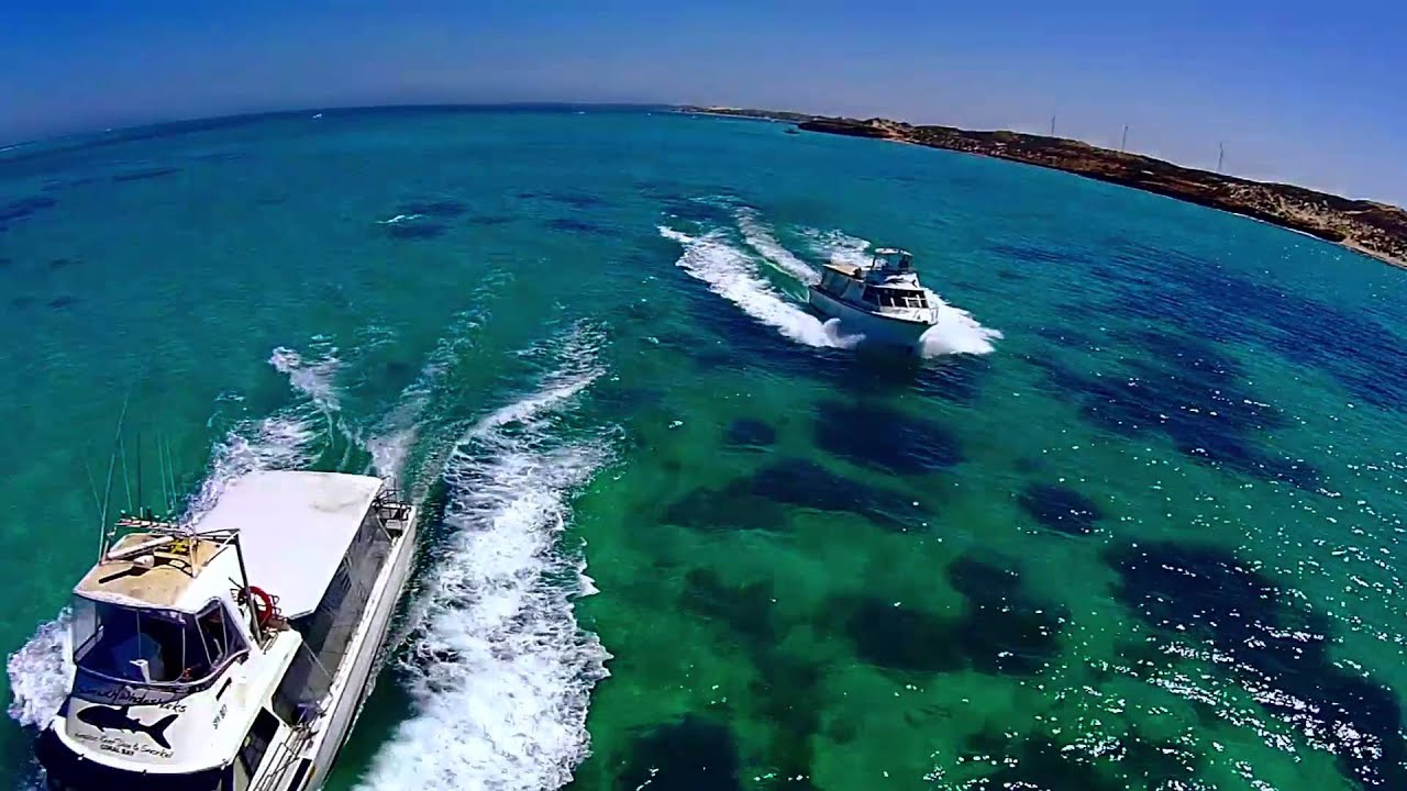 Ningaloo reef dive whale shark adventure swim with whale sharks ningaloo reef youtube - Ningaloo reef dive ...