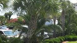www.JacksonvilleLandscapeArchitect.com