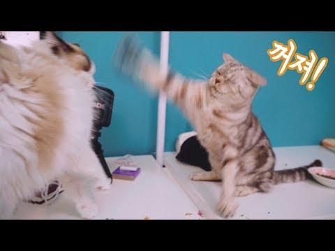 고양이의 질투심이 폭발했어요!