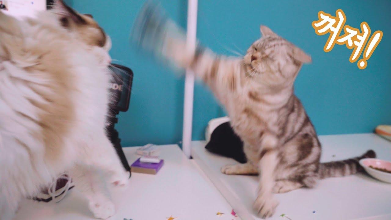 고양이의-질투심이-폭발했어요