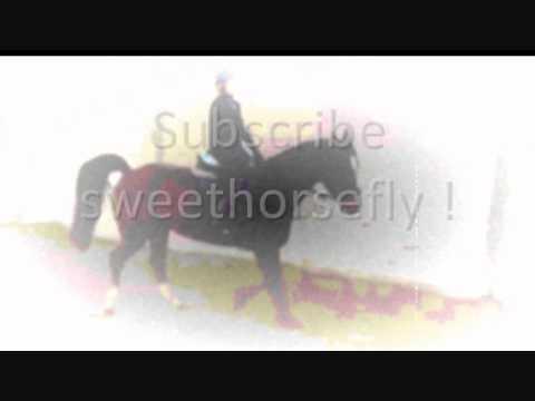 Subscribe Sweethorsefly *-*