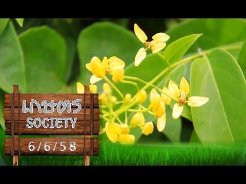 """เกษตร Society 6/6/58 : ปลูกต้นไม้ """"ชายรั้ว"""" ตกแต่งที่พักอาศัย"""