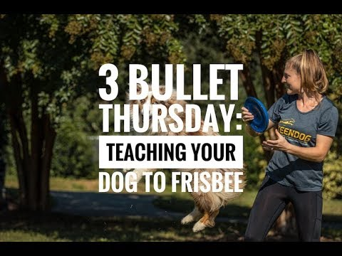 3 Bullet Thursday: Teaching Your Dog To Frisbee