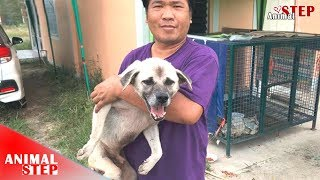 Dog Broken Leg from the Street to Safety and Being Happy