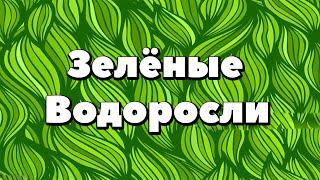 Ботаника.Зелёные водоросли.