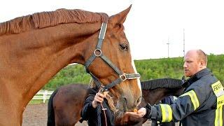 Feuerwehr-Schulung im Stall