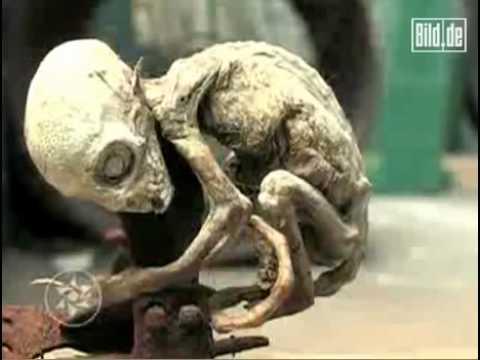 Rätsel in Mexiko Alien Baby in Tierfalle gefangen News Bild de.mp4