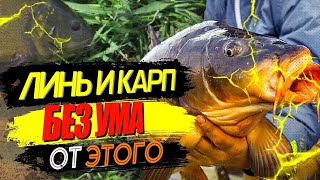 Убийца карпа, карася, линя и всей мирной рыбы. Супер тесто для рыбалки. Бойлы своими руками.