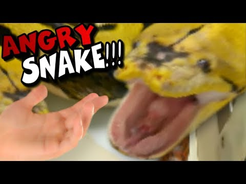 MSTER SNAKE CLEANING GE WRG!! ALMOST GOT BIT!! Brian Barczyk