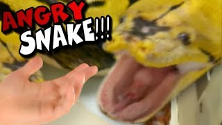 monster snake cleaning gone wrong almost got bit brian barczyk